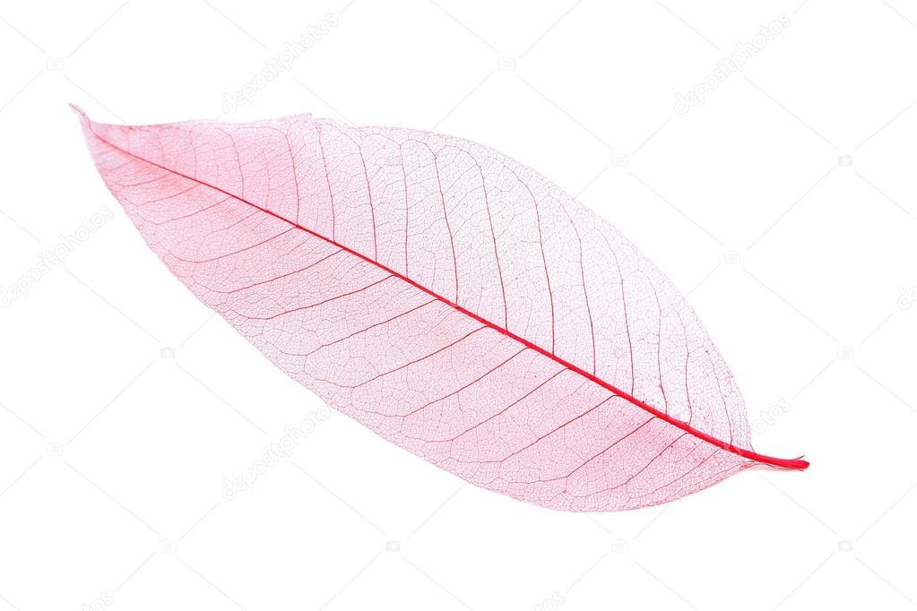 hoja esqueleto color rosa — Fotos de Stock © 5seconds #90828238