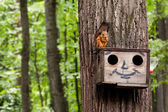 Red squirrel eating nuts on birdhouse. Wooden house with drawn comical funny face. summer forest background