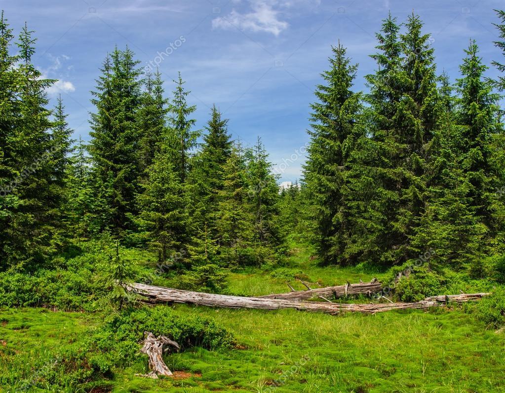 Summer landscape in Carpathian mountains