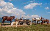 Zigeunerlager mit Pferd und Wagen unterwegs