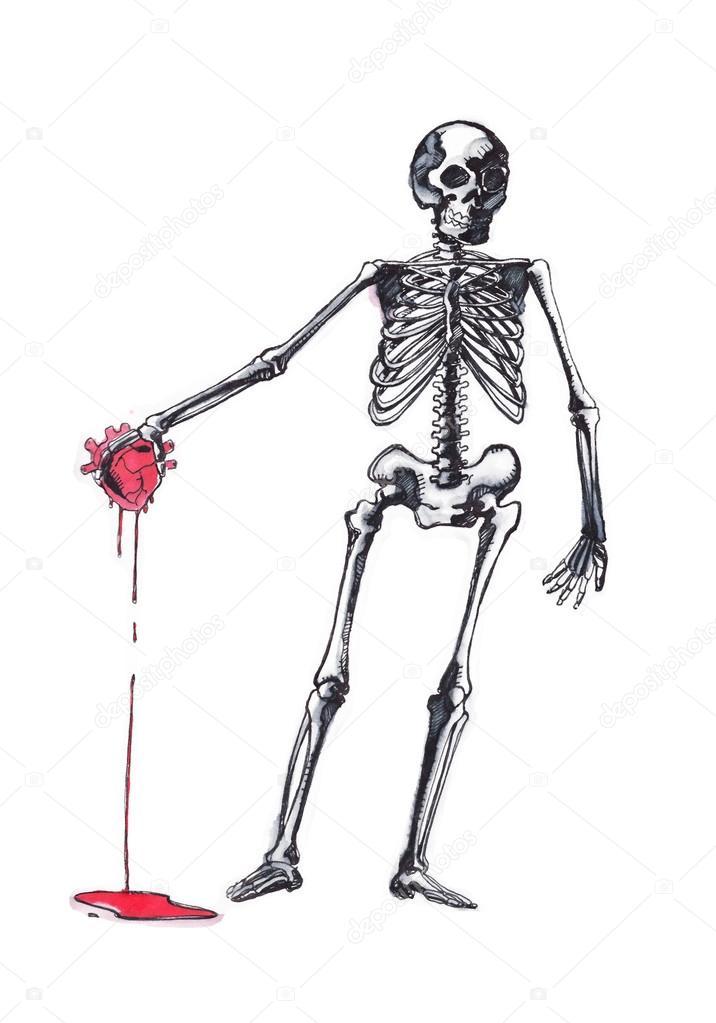 Esqueleto humano con un corazón en la mano — Fotos de Stock ...
