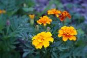 Fotografie divoké květiny na louce