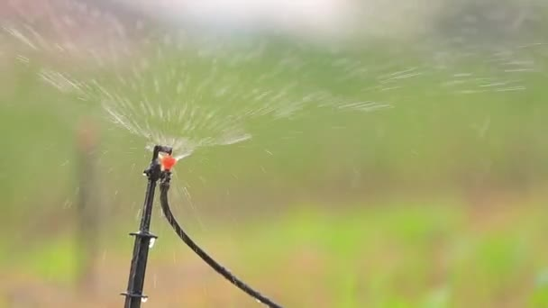 zavlažování zahrady sprinklerů zalévání trávníku