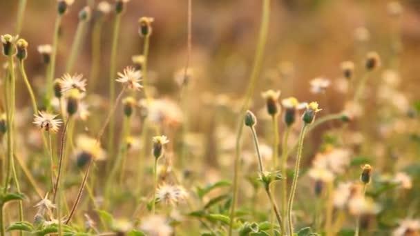 Jarní pole. Pampelišky květiny closeup proti západu slunce obloha. Přírodní scéna