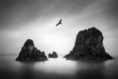 Bird above small islands