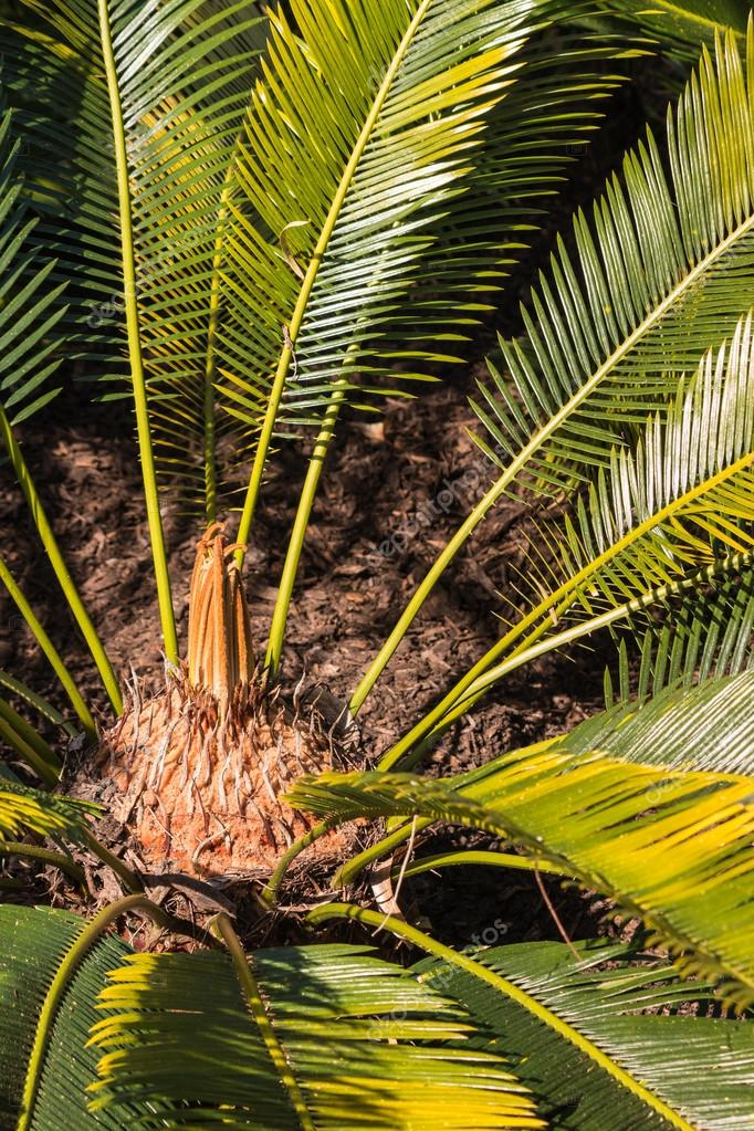palmier 82