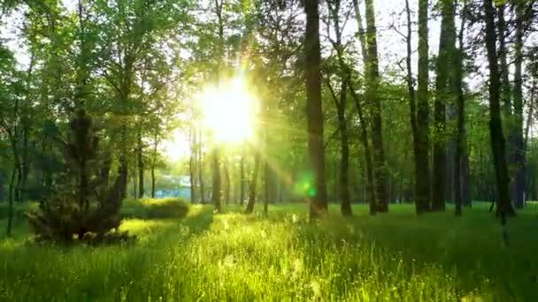 Mladá bujná zelená tráva za úsvitu v parku.