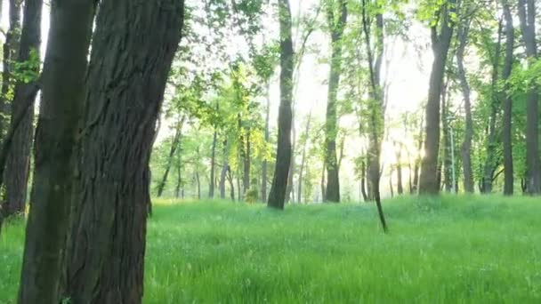 Young lush green grass at dawn in the park.