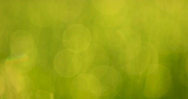 Rozostřené zelené bokeh, listy nebo tráva přírodní pozadí.