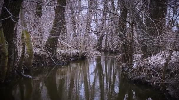 Mezi stromy vodní toky