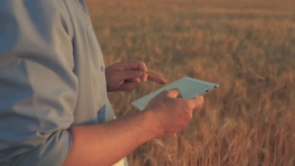 Businessman analyzing grain harvest. Farmer working with tablet computer on wheat field. Agronomist with tablet studying wheat harvest in the field. grain harvest. Agricultural business. Ecologically