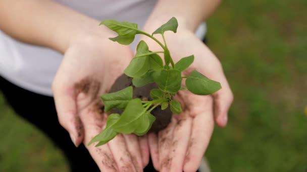 Na dlaních puberťačky je stromeček. Růst a zemědělství nový životní koncept. Chov rostlin a stromů. Zdraví, péče o životní prostředí pro matku Zemi. Zachraňuju život. Biologická rozmanitost rostlin