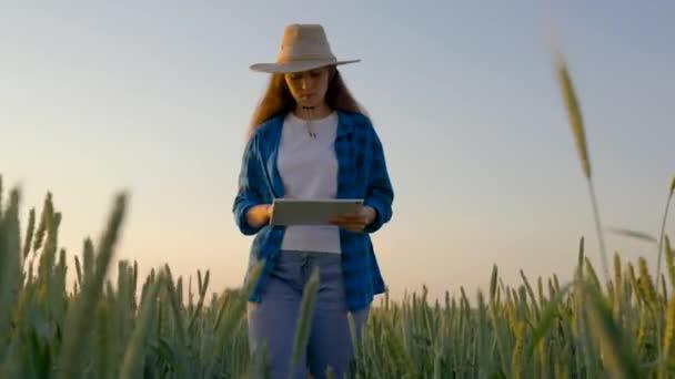Farmářka s digitální tabletou studující sklizeň pšenice na poli. Podnikatelka analyzující sklizeň obilí. Zemědělský obchod. Farmer žena pracuje s počítačem tablet v pšeničném poli.