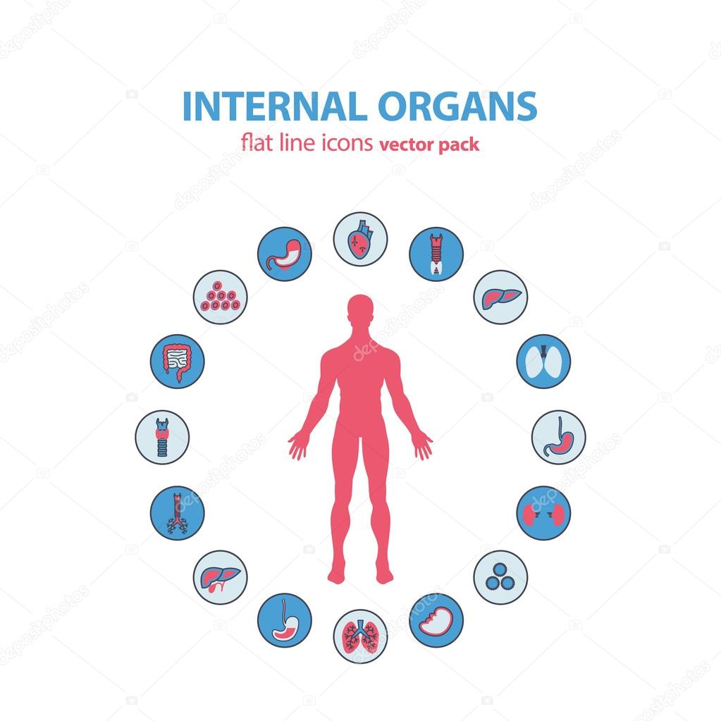 Symbole der menschlichen Anatomie. Vektor-innere Organe-Piktogramm ...