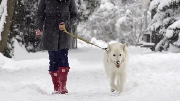 pes na procházce