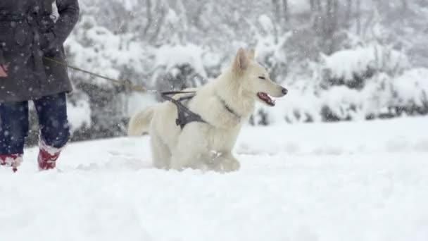 Pes a jeho majitel plahočí