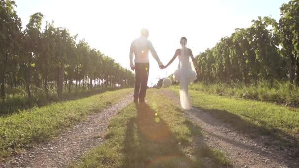 Svatební pár procházky po vinicích
