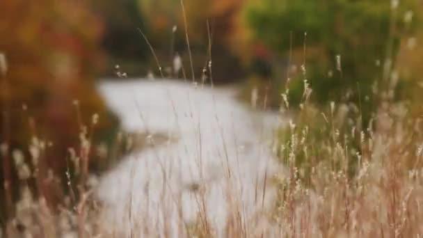 Podzim olistění krásu záběr