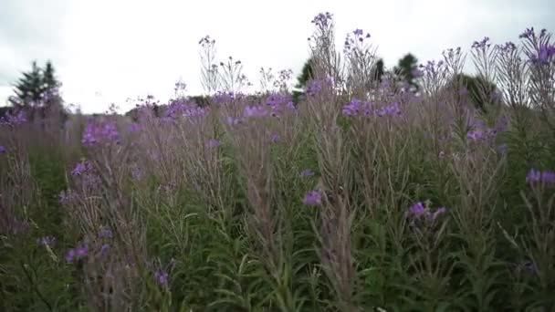Tall grass and flowers
