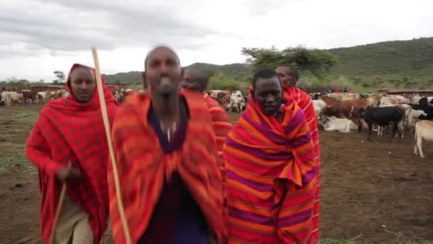 afrikaanse stam voert zang en dans — stockvideo © clippn #81236020