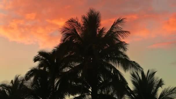 Tropické slunce v barvách