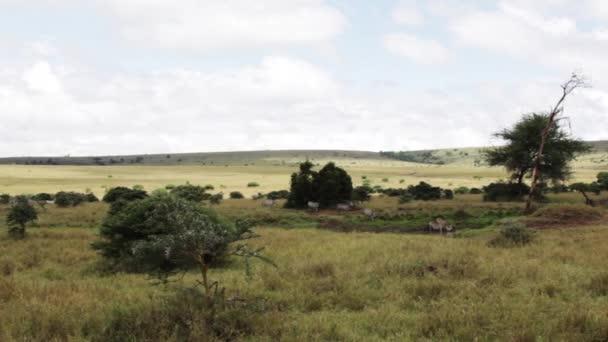 Zebre bere ad un waterhole in Kenya