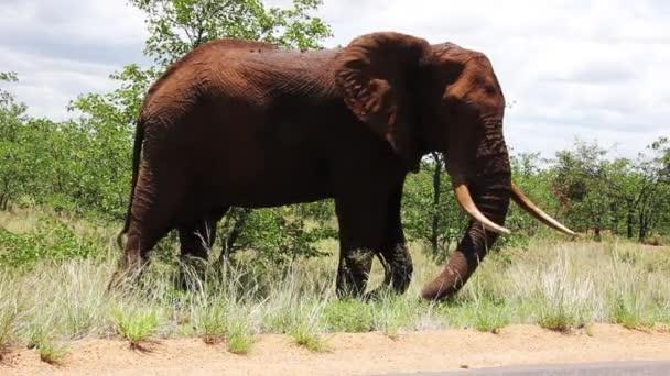 Slon se pase v Jižní Africe