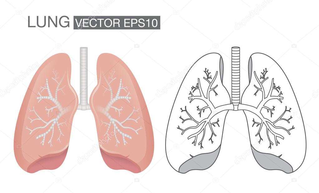 Akciğer Renk Ve Anahat Vektör Stok Vektör Solar22 103294792