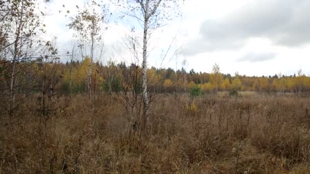 Autumn forest on a cloudy day, defoliation