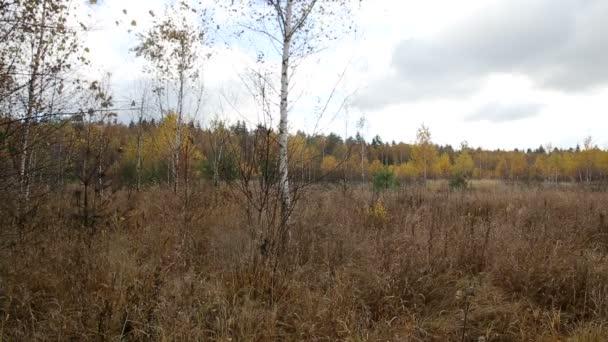Podzimní Les na zamračený den, defoliace