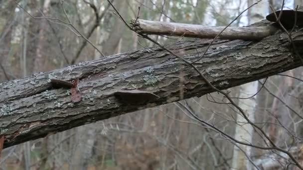 Podzimní Les na zamračený den