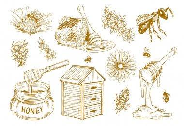 Hand drawn honey flat sketch set. Vintage design elements for flyers with bees, honeycomb and flowers isolated vector illustration collection. Organic food and natural product concept icon