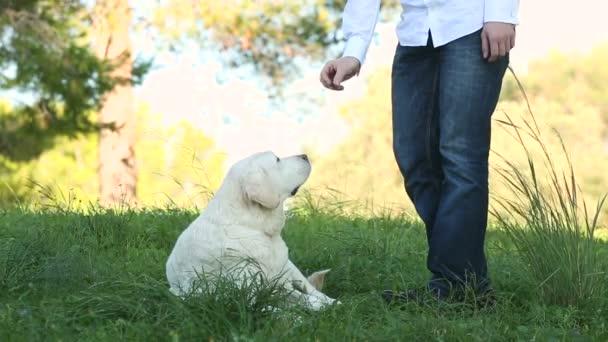 man giving food as reward to his dog