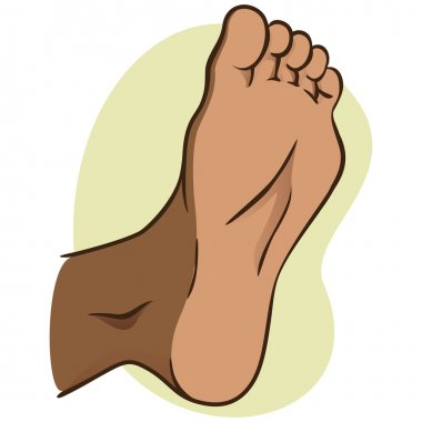 body part illustration, plant or sole of the foot, African descent. Ideal for catalogs, informational and institutional material