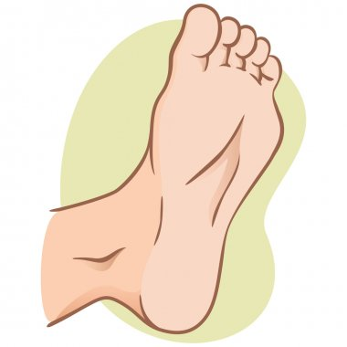 body part illustration, plant or sole of the foot, caucasian. Ideal for catalogs, informational and institutional material
