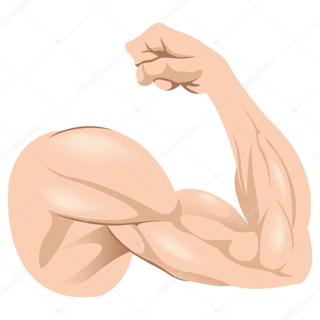 人体解剖学腕筋肉の男性を表す図制度やトレーニング教材に最適
