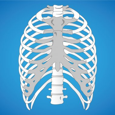 Illustration First Aid, Anatomy human rib cage. Ideal for catalogs, informative and medical guides