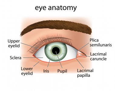 Illustration of a close and a human eye. Ideal for medical supplies and inditucionais