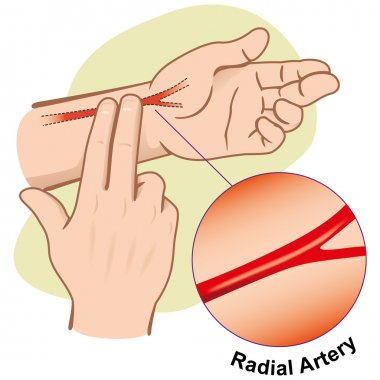 First Aid illustration person measuring pulse by Artery Radial. Ideal for catalogs, informative and medical guides.