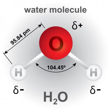 Illustration representing structure and composition of the water molecule chemical. ideal for educational books and institutional material