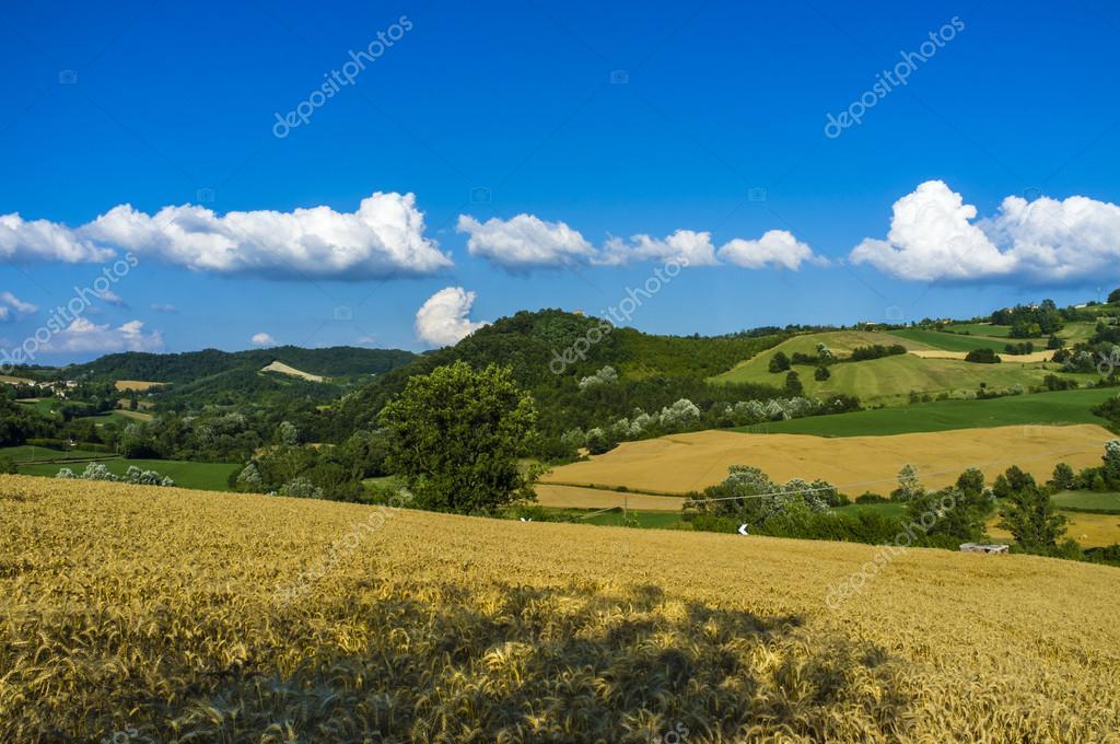 Oltrepo Pavese landscape. Color image