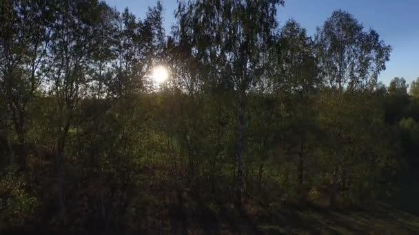 4 k légifelvételek zöld fák, és a nyári mező mögött