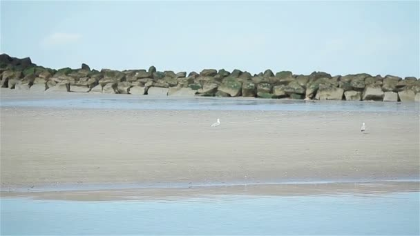 White sea gulls walking near groin stones on the beach of Trouville harbor, Normandy, France