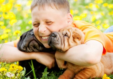 Happy Boy and Two Shar-Pei Dogs
