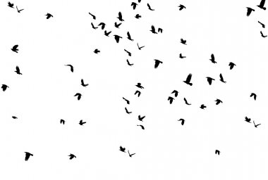 Set of Black Silhouettes of Birds Flying in the Sky.