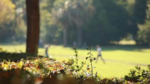 trávník v parku