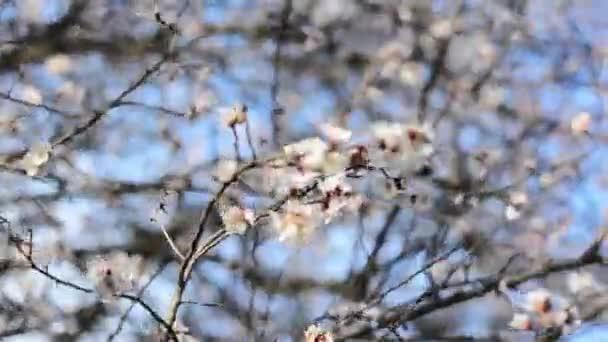 A tavaszi virágzás a kertben