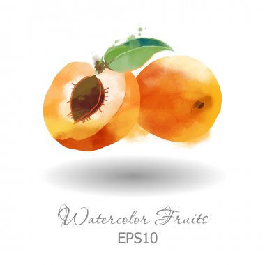 Watercolor apricots on white