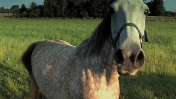 One Horse on a meadow