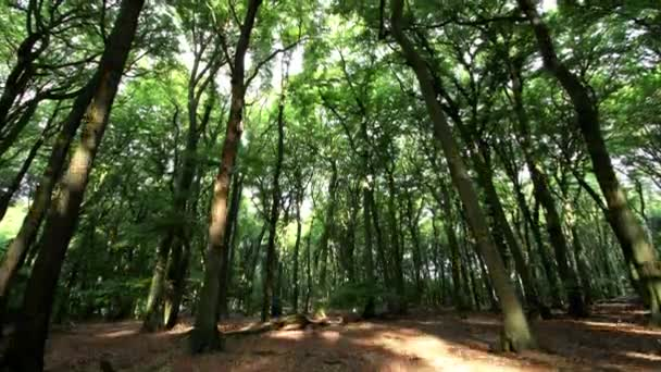 Foresta, Time Lapse